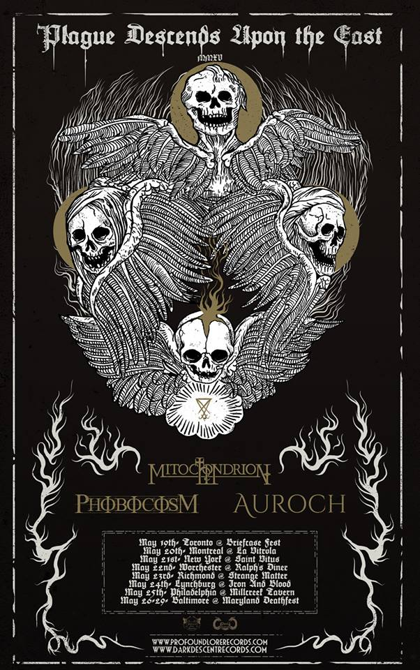 auroch tour