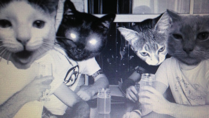MEATWOUND BandCats1_web